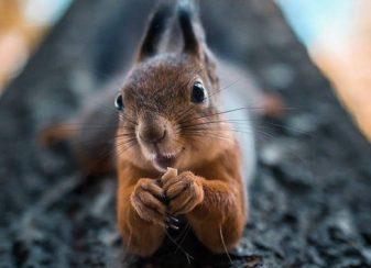 Un photographe traite les animaux f
