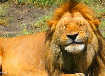 34 magnifiques animaux toujours prets f