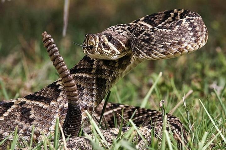 40 des serpents les plus 01
