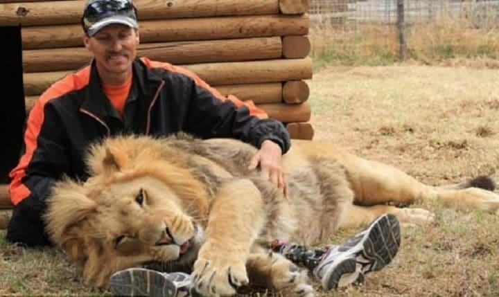 Des lions ont eu une 01