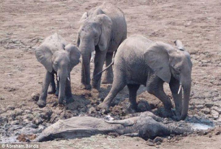 Un elephanteau et sa mere 01