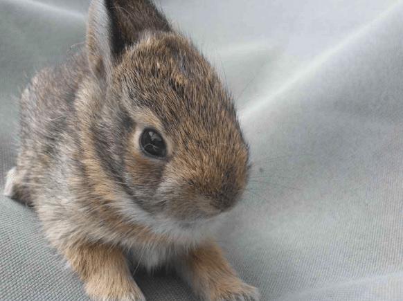 Un lapin terrifie est confie 02