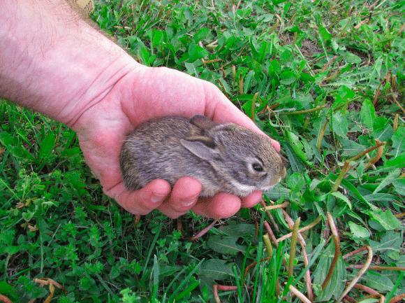 Un lapin terrifie est confie 03