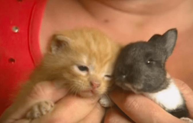 chatte de lapin