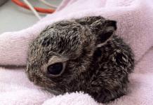Un lapin terrifie est confie f