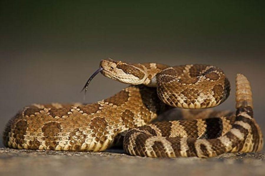 40 des serpents les plus 02