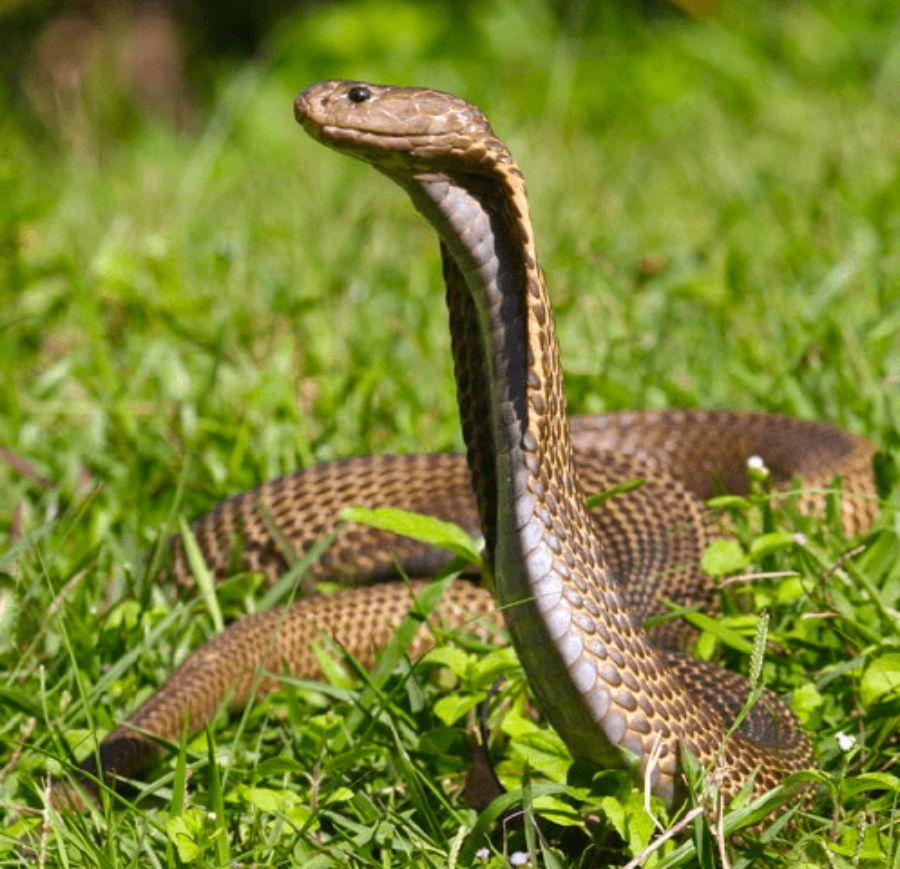 40 des serpents les plus 03