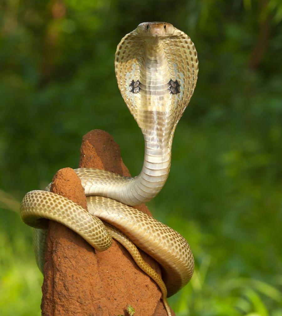 40 des serpents les plus 15