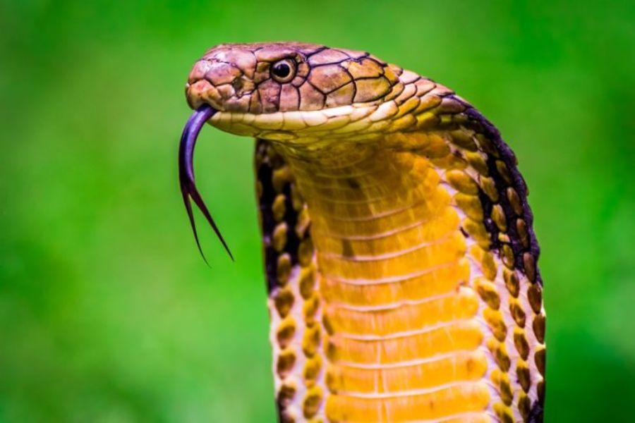 40 des serpents les plus 46