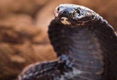 40 des serpents les plus f