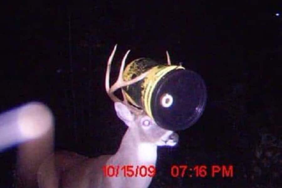 Des cameras de trail capturent 01