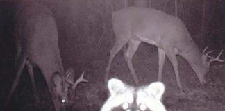 Des cameras de trail capturent 10