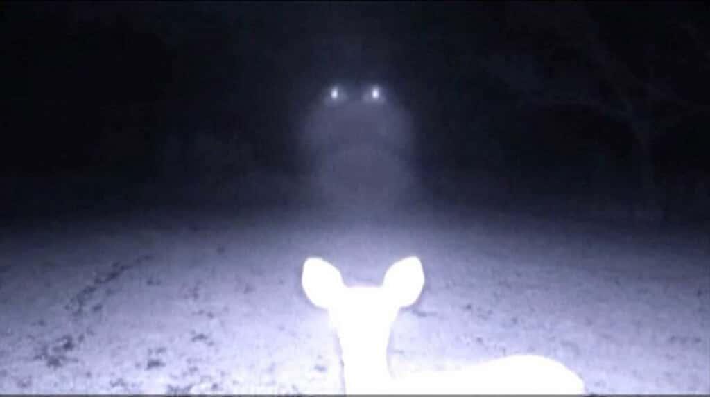 Des cameras de trail capturent 25